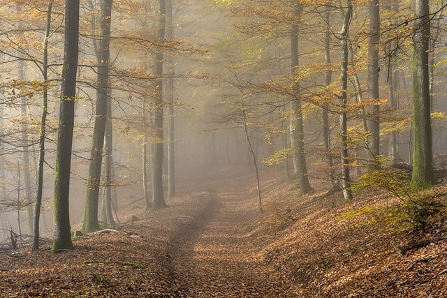 *Autumn dreams in the Eifel forest*