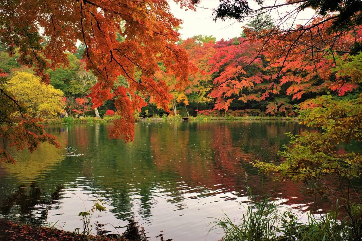 【軽井沢】雲場池の紅葉