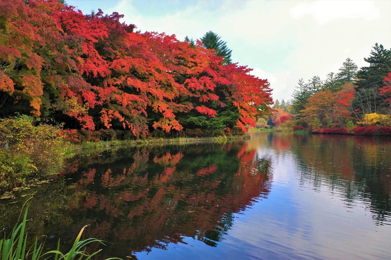 【軽井沢】雲場池の紅葉風景