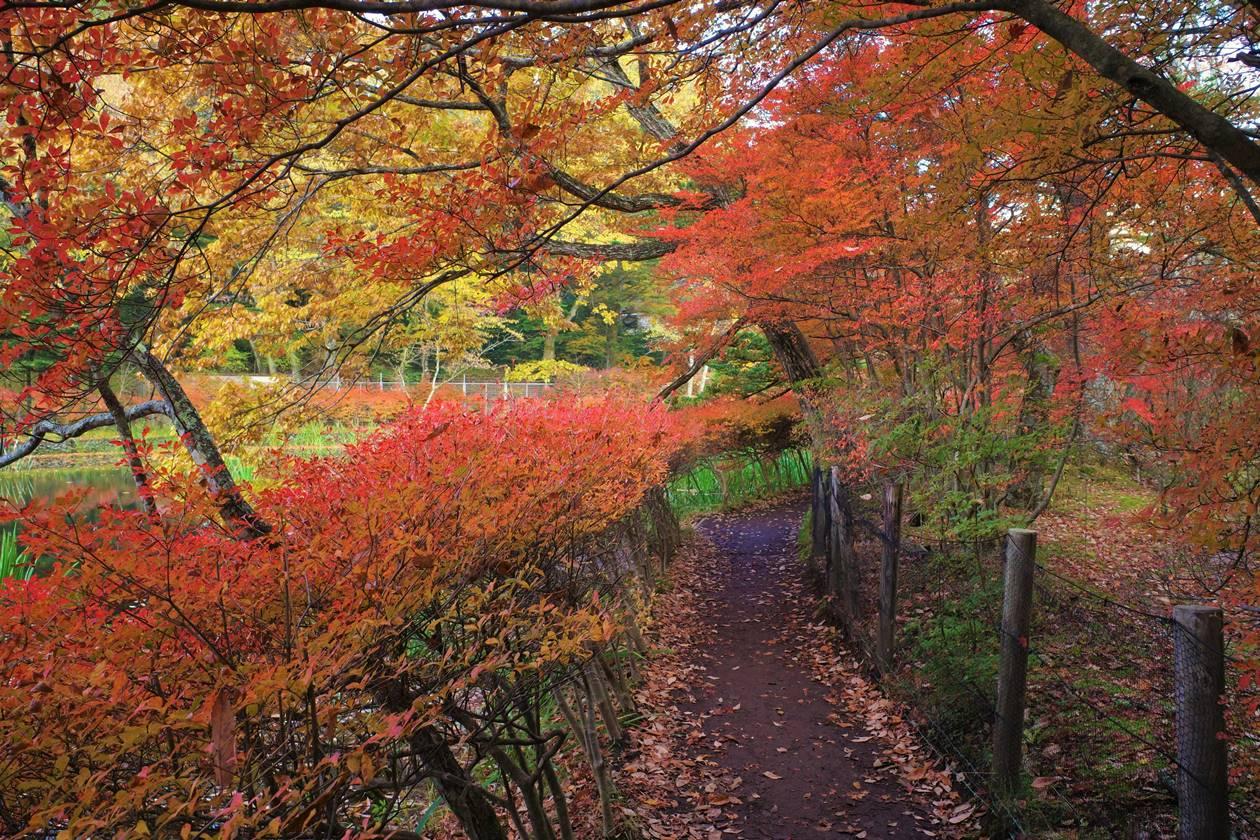 【軽井沢】雲場池 紅葉のトンネル
