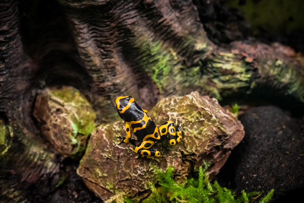 a little yellow tree frog