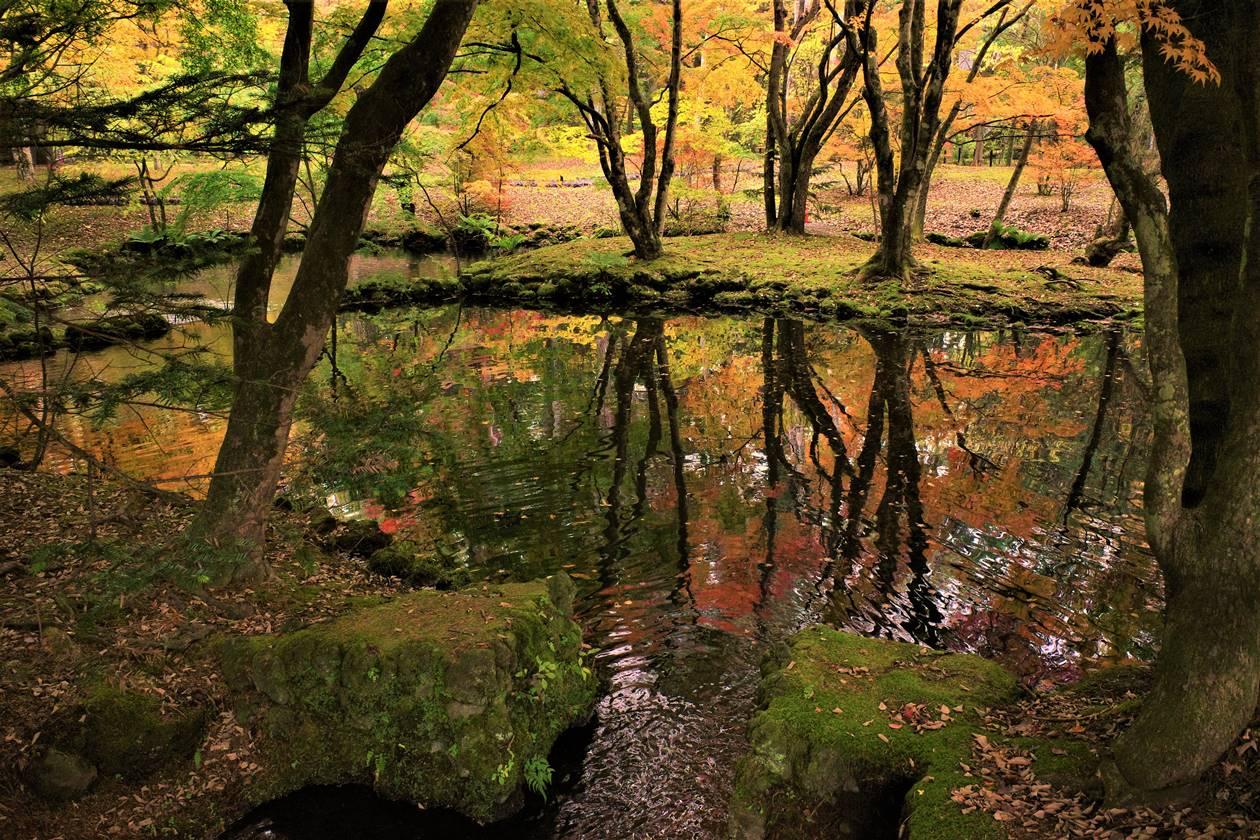 【軽井沢】雲場池 鏡の紅葉