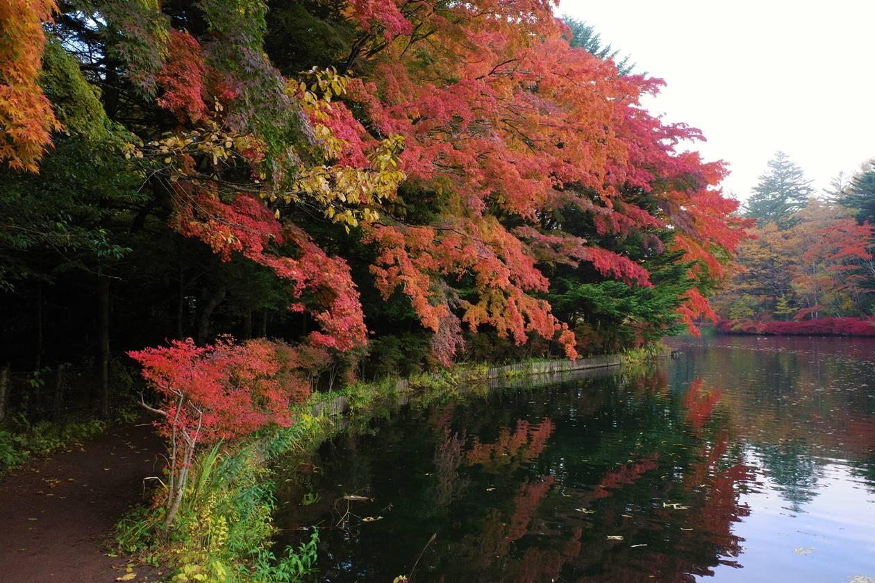 【軽井沢】雲場池 紅葉の散策路