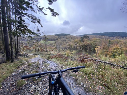 Grizedale Loop