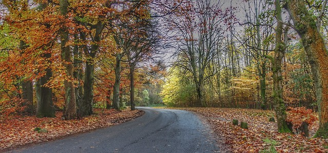 ....autumn tones on the winding road....