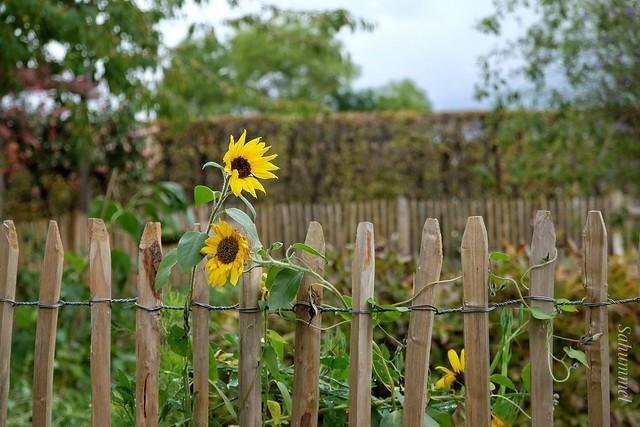 Happy Fence Friday im Britzer Garten