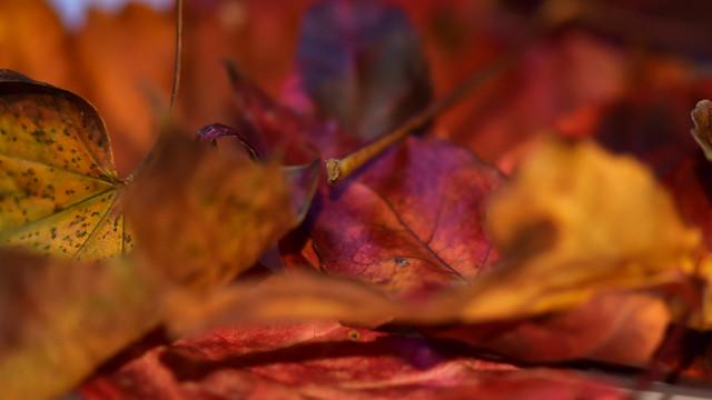 Lumières sur l'automne in explore 7 nov 2020