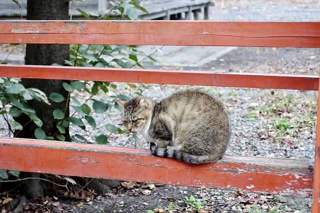Today's Cat@2020−11−06