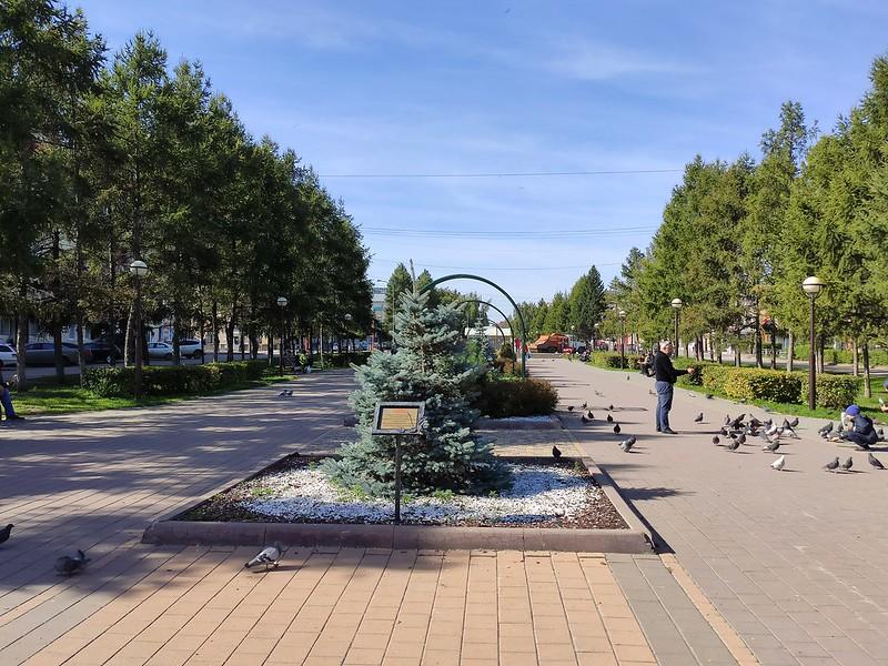 Белово - Голуби на улице Юбилейной