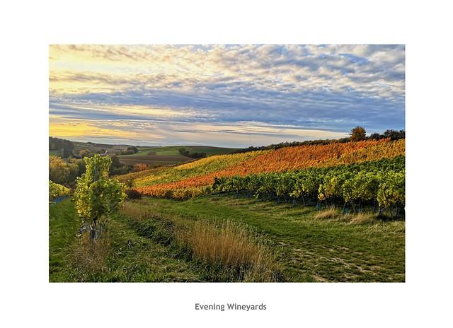 Evening Wineyards