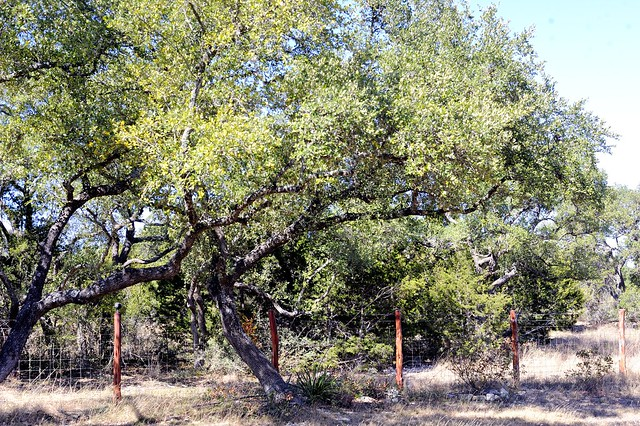 _DSC3484e ~ Cedar Post Fence