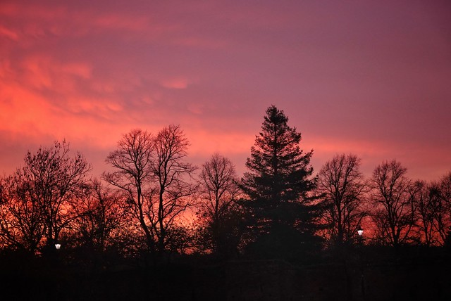 Tree silhouettes at sunset!