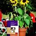 Sunflowers and Alzheimers, Tucson Arizon