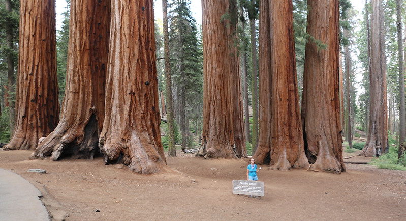 Vicki poses with the Parker Group of Giant Sequoias in Sequoia National Park