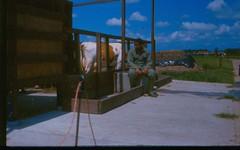 Oentsjerk Praktijkschool. 1990. De  Afrikaanse ligboxenstal op bedrijf A.-25