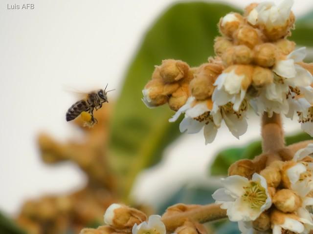Bee vs pollen