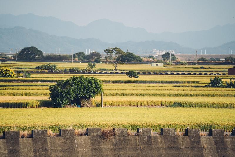 外埔忘憂谷|Taichung