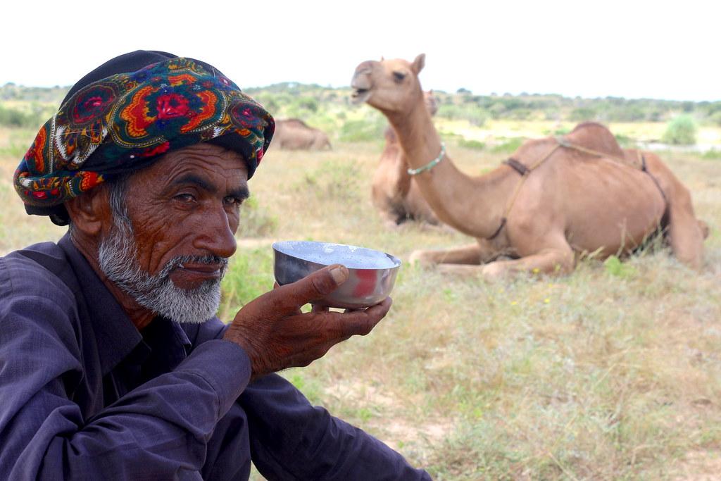 Fresh camel milk in Kutch region of Gujarat. Photo from Sahjeevan.