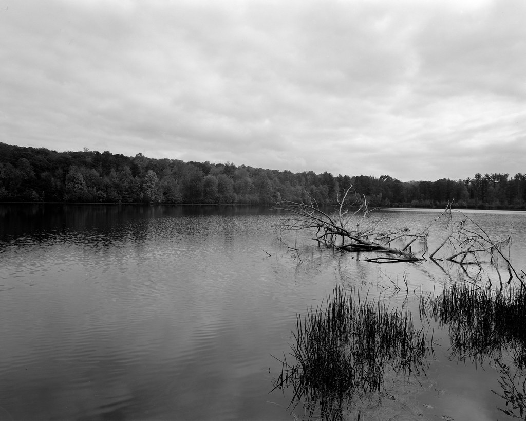 Naugatuck State Forest. Reservoir Two with Tree.