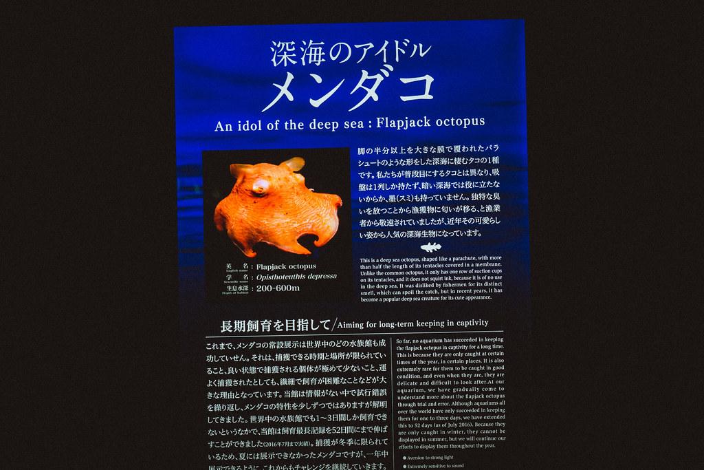 OLYMPUS E-M1 + M.Zuiko Digital 12-40mm F2.8 Pro