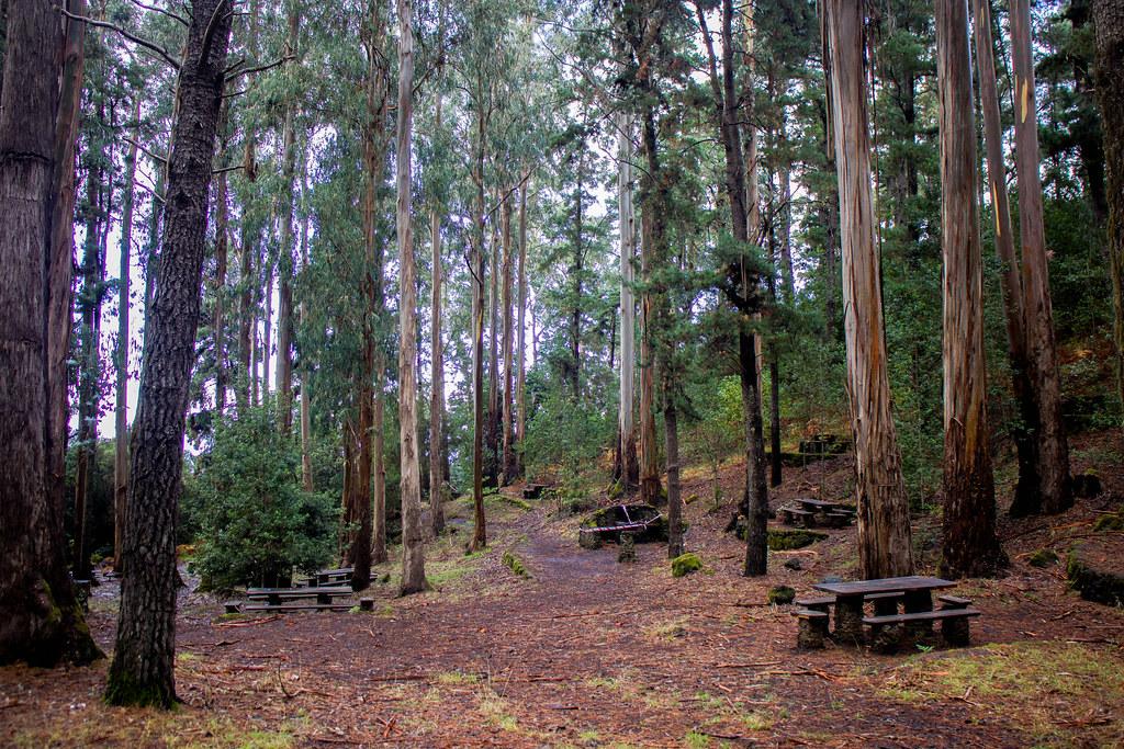 Pinos y eucaliptos en el interior de Hoya del Abade