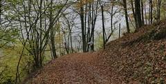 Campan (Hautes-Pyrénées, Occitanie, Fr) – Les paysages du reconfinement sous règle du 1 x 1  (1 heure x 1 Km)