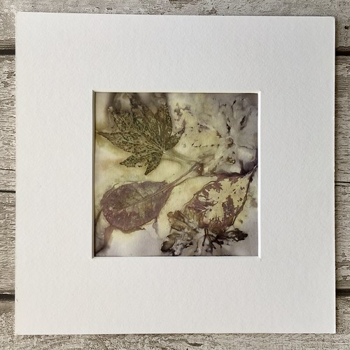 Woodland Floor ecoprints giveaway from Kiln Fired Art