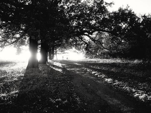 shrewsburypark plumstead positiveplumstead wintersun sunset sunray ricohgrii ricohgr blackandwhite monochrome se18stories se18 southeastlondon shadows