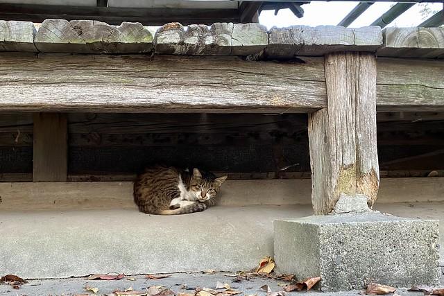 Today's Cat@2020−11−07