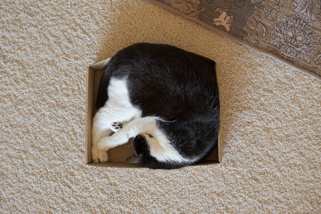 Our cat Boo sleeps curled up in a cardboard box on November 2, 2020. Original: _RAC7504.arw
