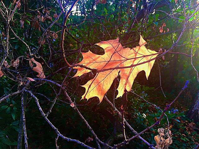Wandlung ist notwendig wie die Erneuerung der Blätter im Frühling(Vincent van Gogh)