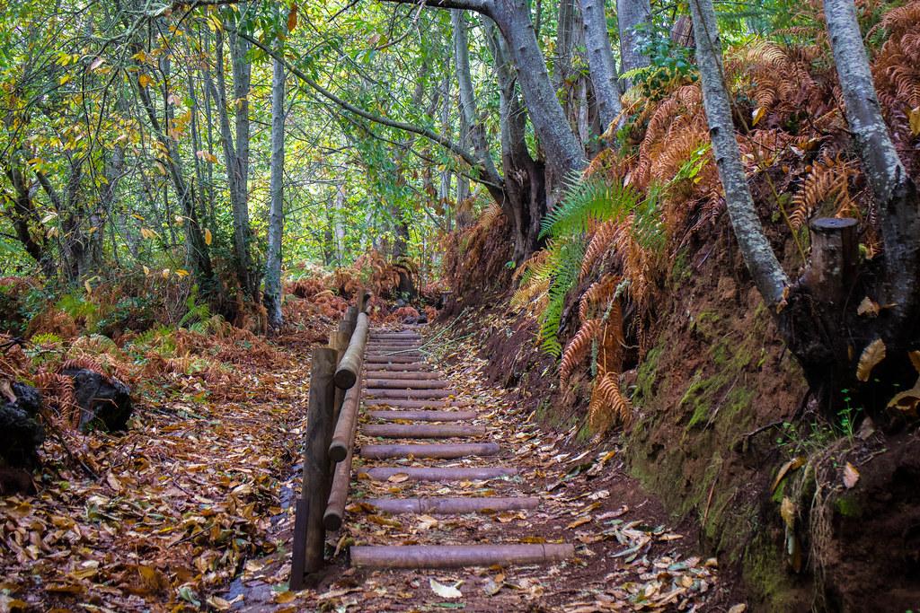 Camino de los castaños en La Victoria en Tenerife