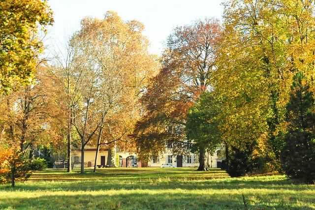 November 2020 ... November im Schlossgarten Neckarhausen ... Brigitte Stolle