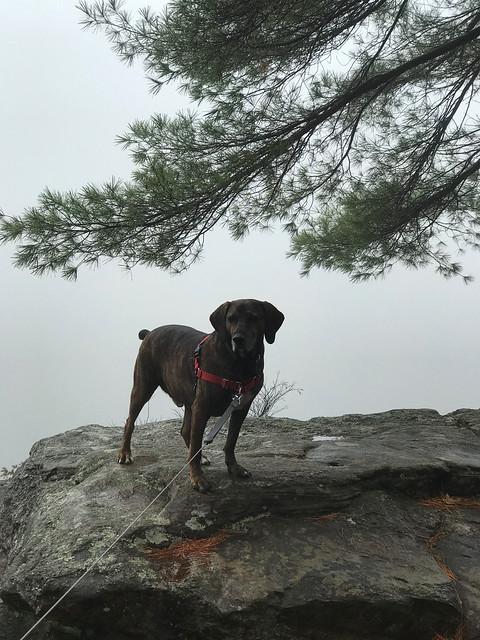Algonquin PP - Achray -Barron Canyone Hector in the fog on the edge