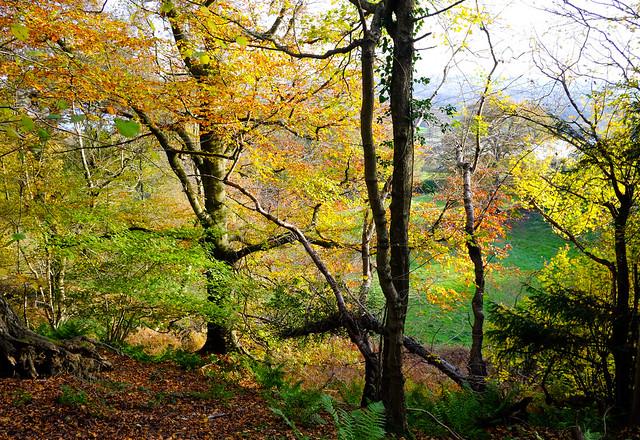 Weir Wood Sussex..