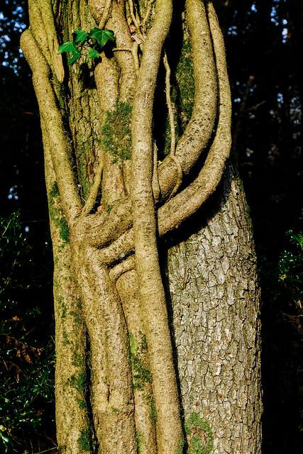 Roudsea Woods