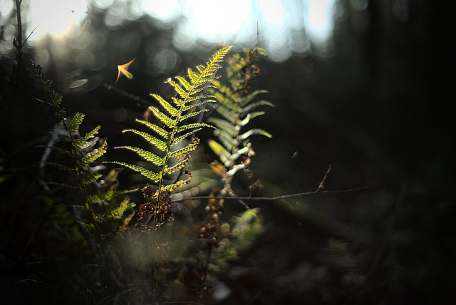 Flares and fern