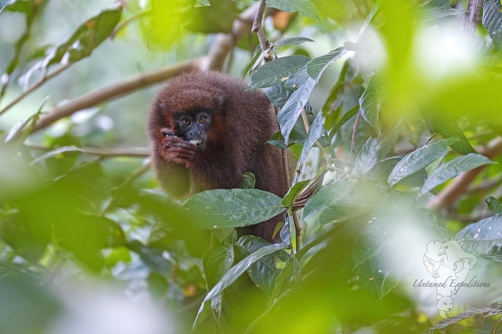 Little Soul of the Rainforest