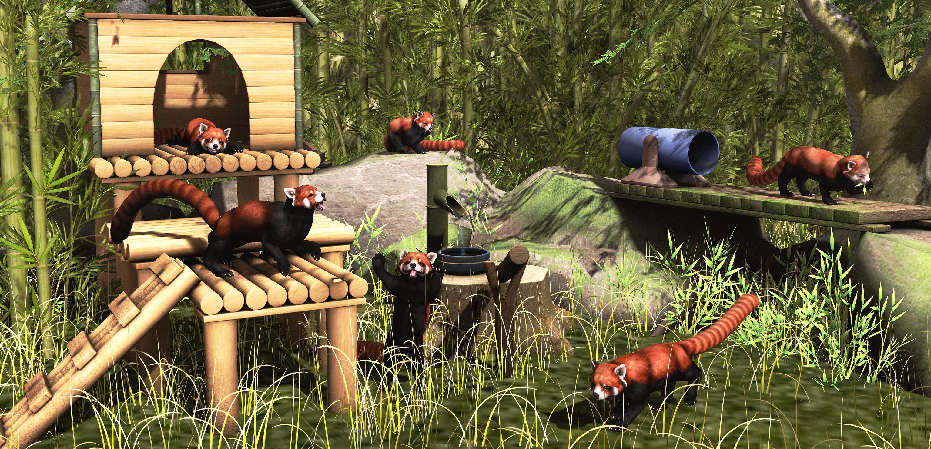 Red Pandas at Play