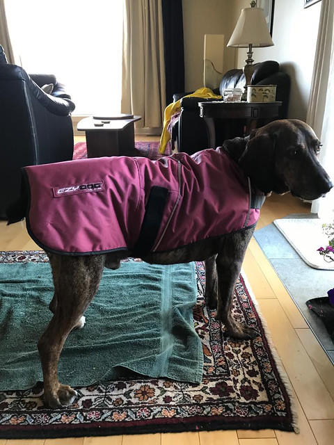 Carleton Place - Hectors new coat