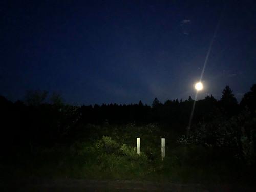 Algonquin PP - Mew Lake - Night walk