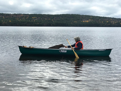 Algonquin PP - Achray - the canoe and Hector
