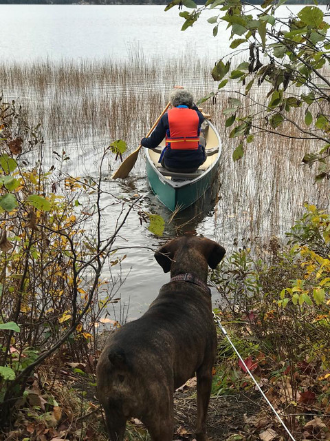 Algonquin PP - Achray - Hector watching Pierre canoe