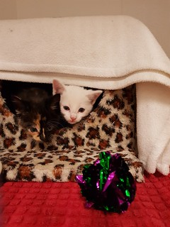Kittens - Spring and Pippa