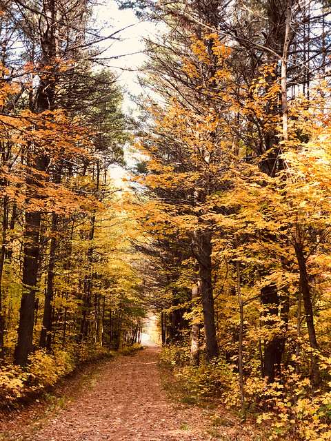 Gatineau Park - a colourful trail