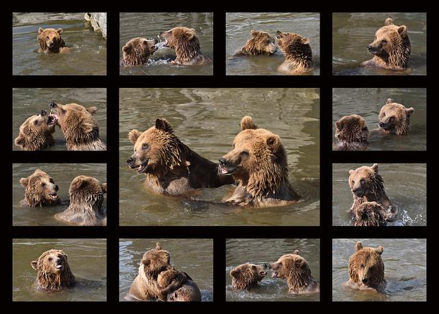 Bären-Bade-Spaß
