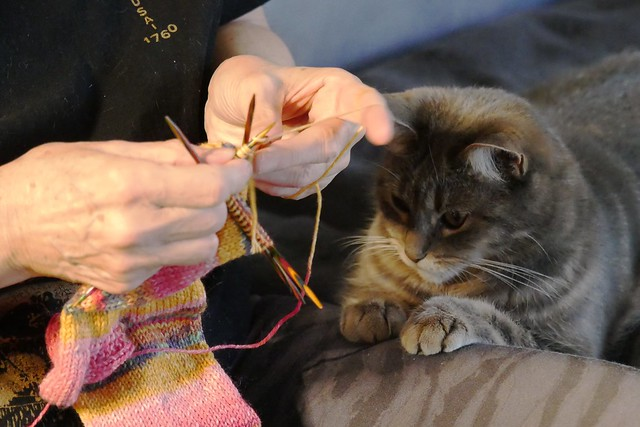 Socken stricken mit Wilma