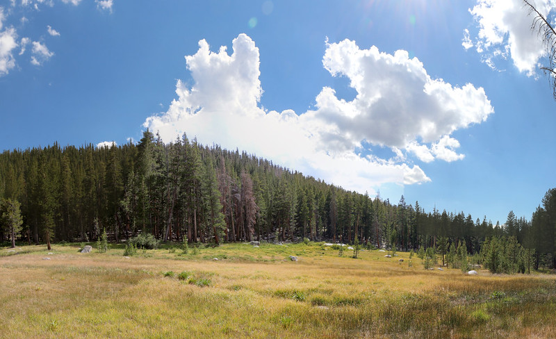 Grassy meadow near Rock Creek on the Pacific Crest Trail