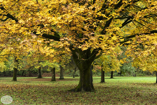 lewisandclark lewisandclarkpark statepark oregon oregonstatepark fallautumn tree foliage fallfoliage garyquay garylquay columbiagorge landscape november autumnleaves 2020 troutdale usa