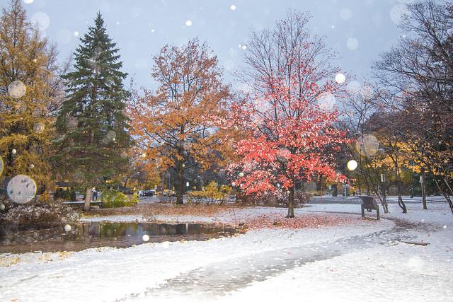 L'automne vers l'hiver (Autumn to winter)